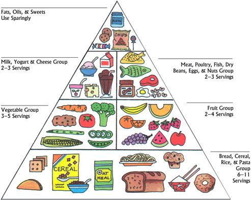 The Food Pyramid - Lessons - Tes Teach
