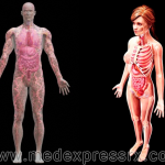 How-and-Why-Are-Male-and-Female-Body-Organs-Different-and-How-It-Affects-Their-Health
