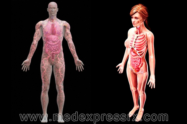 How And Why Are Male And Female Body Organs Different And How It