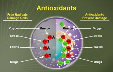 Image result for images of antioxidants