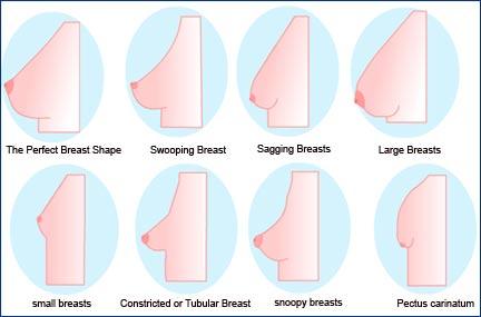 Perfect female breast